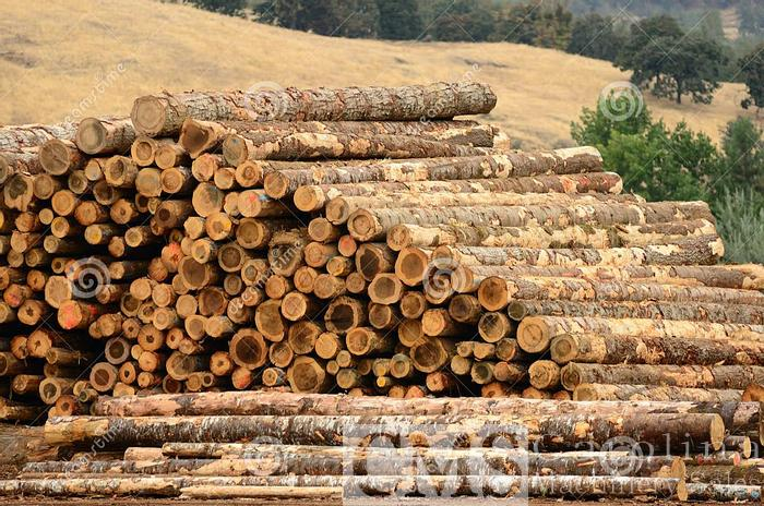 Used Complete Sawmill Land, Buildings, Machinery and Inventory