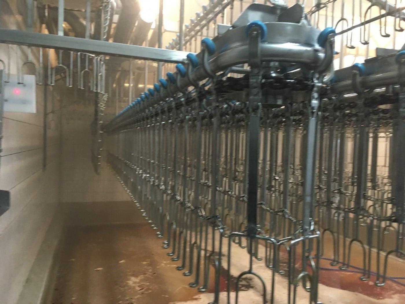 Poultry Slaughter Line 3.000 bph